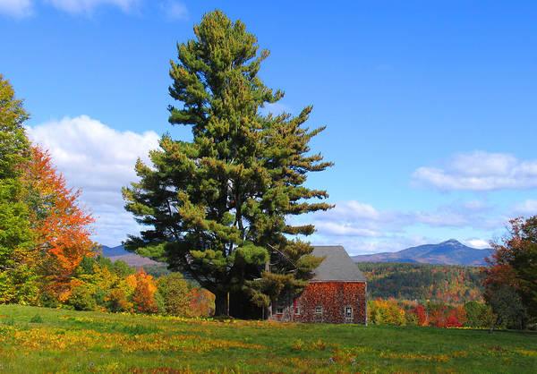 Photograph - Tree And Barn Autumn by Larry Landolfi