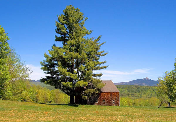 Photograph - Tree And Barn Spring by Larry Landolfi