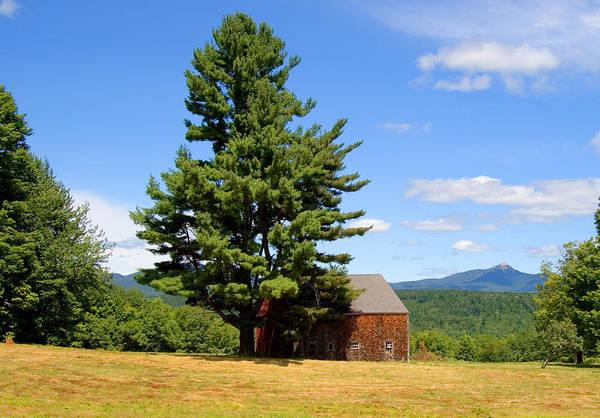 Photograph - Tree And Barn Summer by Larry Landolfi