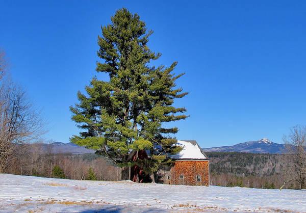 Photograph - Tree And Barn Winter by Larry Landolfi