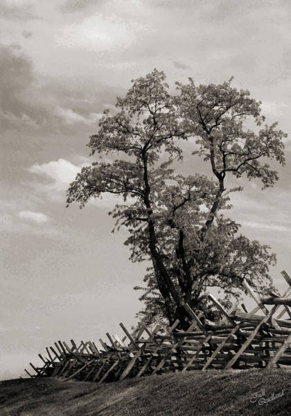 Wall Art - Photograph - Tree At Bloody Lane Black And White by Judi Quelland