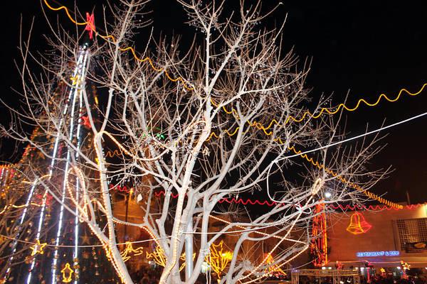 Manger Photograph - Tree At Manger Square In Bethlehem by Munir Alawi