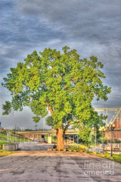 Photograph - Tree At Newport On The Levee by Jeremy Lankford