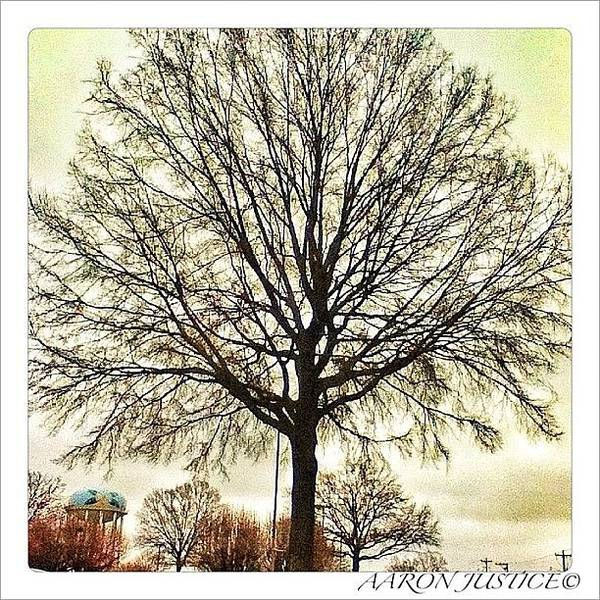 Wall Art - Photograph - #tree #beautiful #instagram #instahub by Aaron Justice