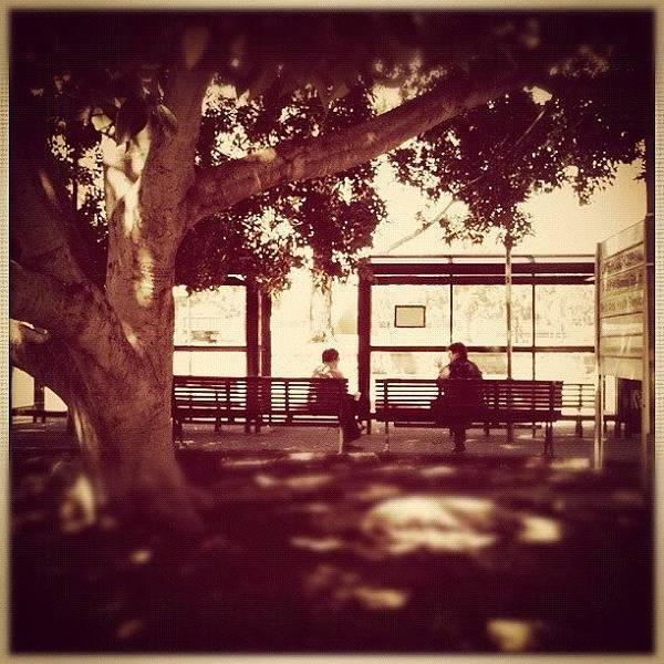 Bus Photograph - Tree Bus Stop #tree #bus #stop by Luke Fuda