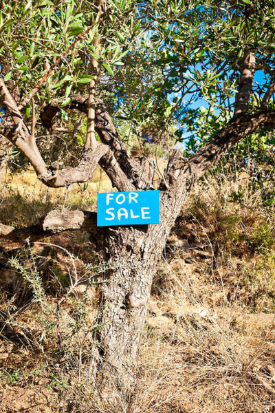 Smallholding Photograph - Tree For Sale by Tom Gowanlock