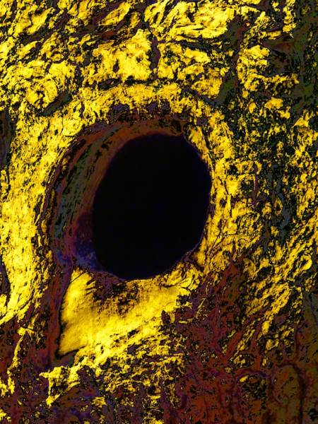 Photograph - Tree Hollow Abstract by Beth Akerman
