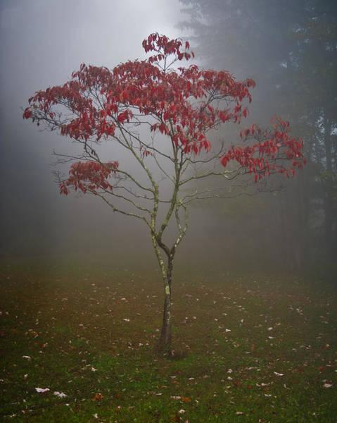 Tree In Fog Art Print