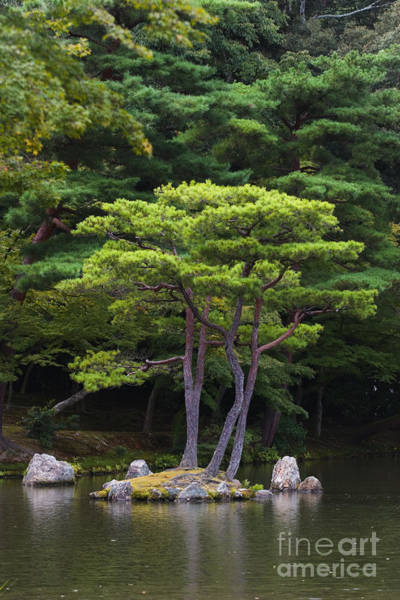 Kansai Region Wall Art - Photograph - Tree In Garden Pond by Ei Katsumata