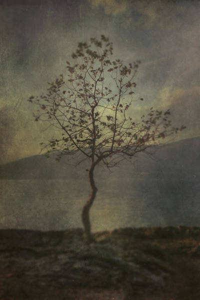 Waters Edge Wall Art - Photograph - Tree by Joana Kruse