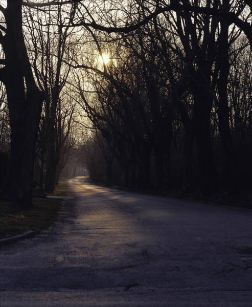 Wall Art - Photograph - Tree Lined Paved Road With An Evening by Greg Probst