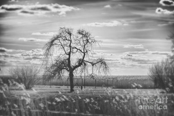 Wall Art - Photograph - Tree by Miso Jovicic