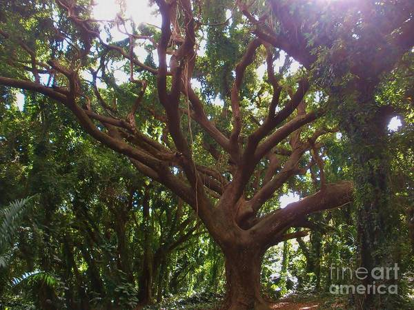 Photograph - Tree Of Life by Jeanie Watson