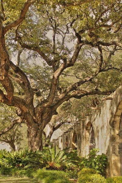 Photograph - Tree Over Alamo Gardens In Hdr by Sarah Broadmeadow-Thomas