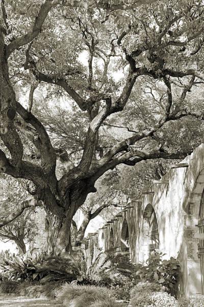 Photograph - Tree Over Alamo Gardens by Sarah Broadmeadow-Thomas