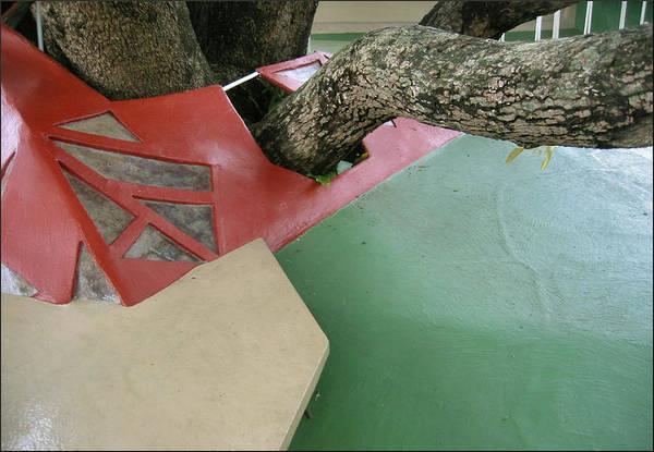 Photograph - Tree Shade - Glenn Studio 1992 by Glenn Bautista