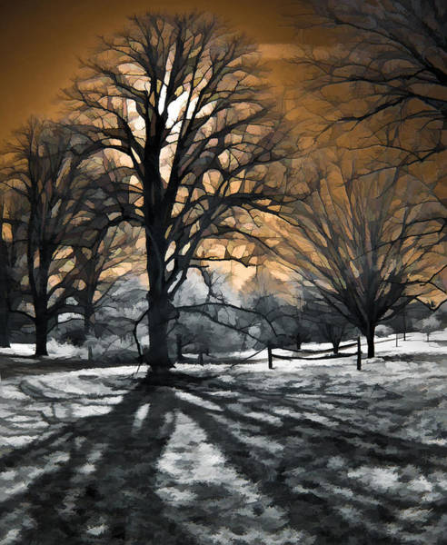 Photograph - Tree Shadow by Steve Zimic