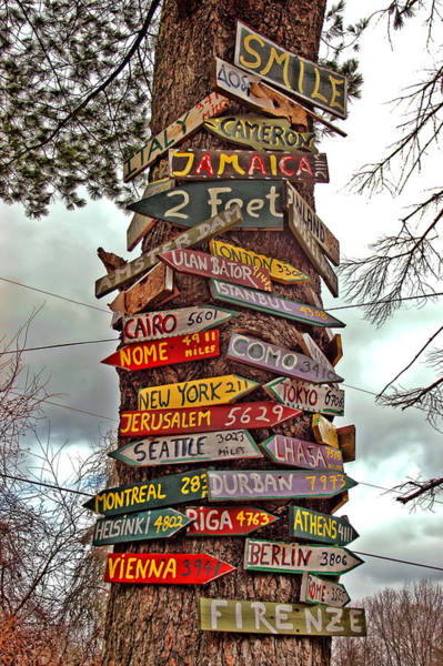 Photograph - Tree Signs by Joann Vitali