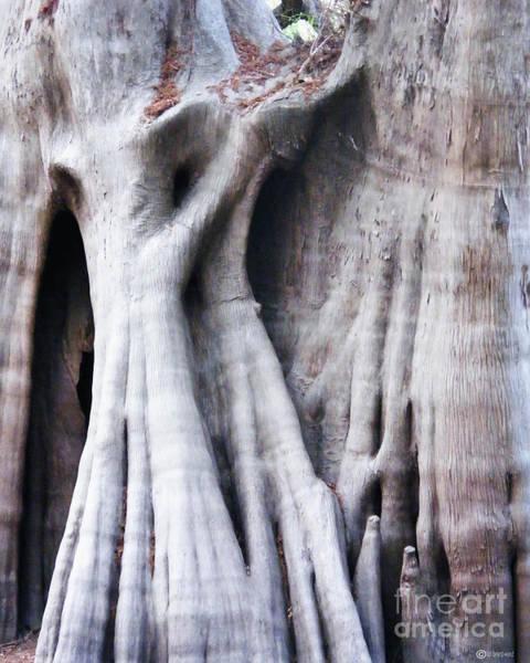 Bald Cypress Digital Art - Tree Spirits by Lizi Beard-Ward