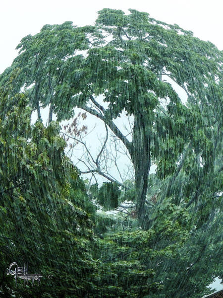 Photograph - Tree Swirl Downpour by Glenn Feron