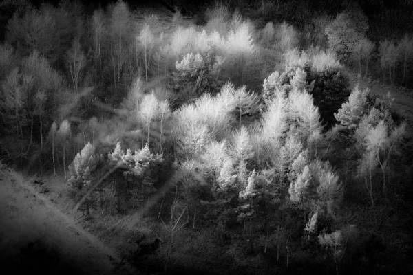 Holyrood Photograph - Tree Tops by Dorit Fuhg