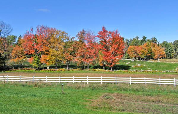 Photograph - Trees And Fence Autumn by Larry Landolfi