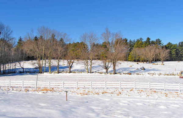 Photograph - Trees And Fence Winter by Larry Landolfi