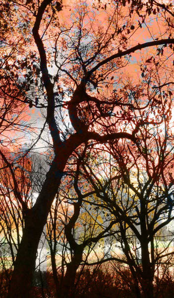 Digital Art - Trees And Paint by Anita Burgermeister