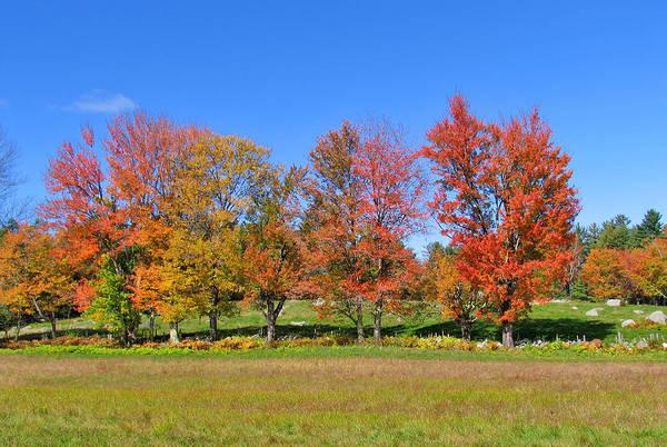 Photograph - Trees In Autumn by Larry Landolfi