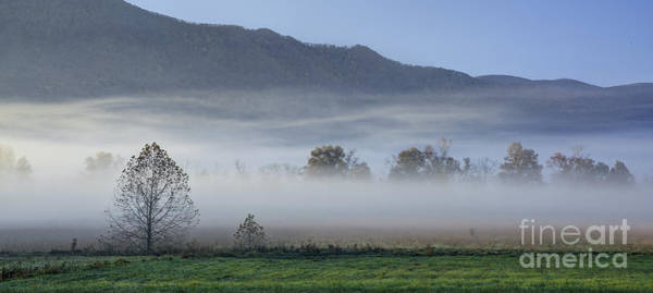 Photograph - Trees In Fog by David Waldrop