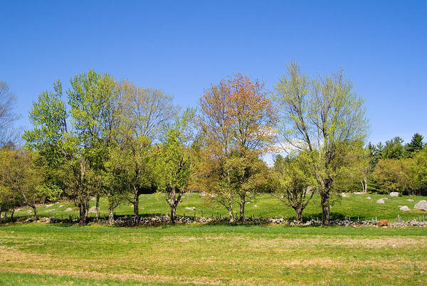Photograph - Trees In Spring by Larry Landolfi