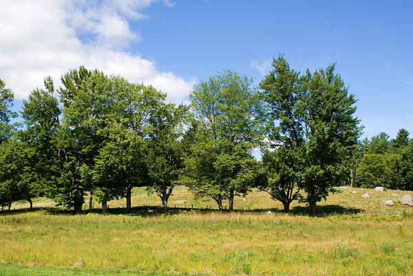 Photograph - Trees In Summer by Larry Landolfi