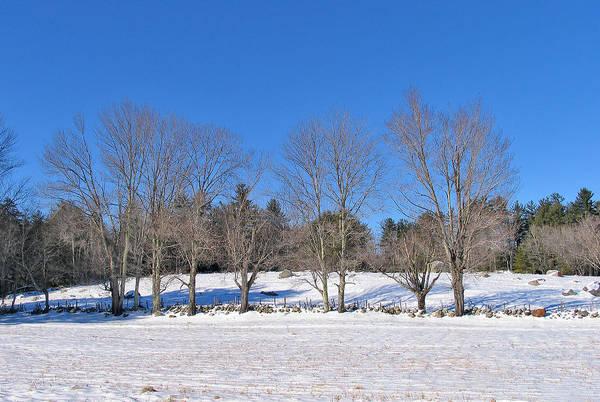 Photograph - Trees In Winter by Larry Landolfi