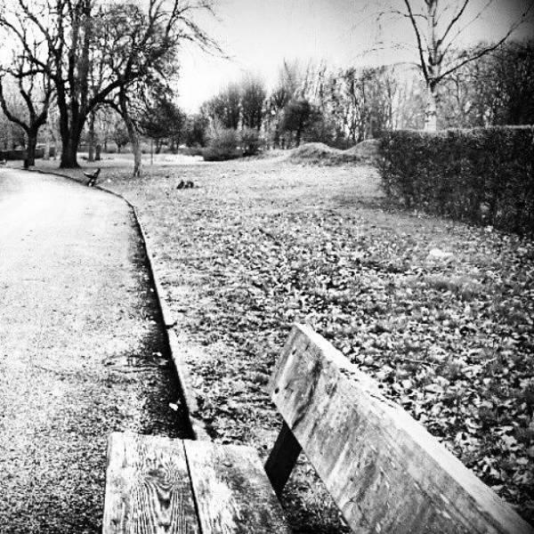 England Wall Art - Photograph - #trees #nature #chair #blackandwhite by Abdelrahman Alawwad