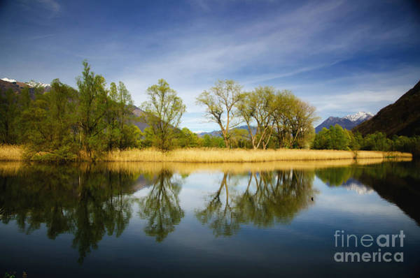 Trees Reflections On The Lake Art Print