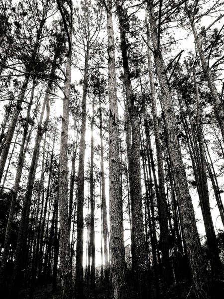 Photograph - Trees To Infinity by Trish Tritz
