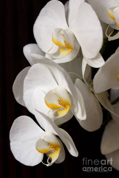 Photograph - Triple Beauty by Todd Blanchard