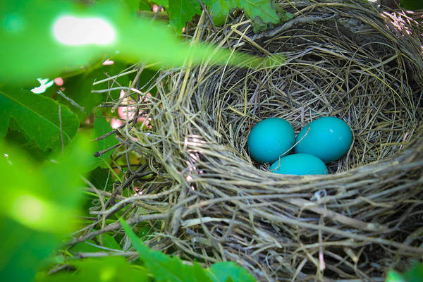 Robin Egg Blue Photograph - Triplets by Christy Patino