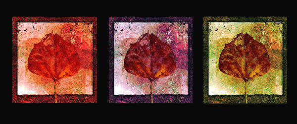Contrast Mixed Media - Triptych Leaves  by Ann Powell