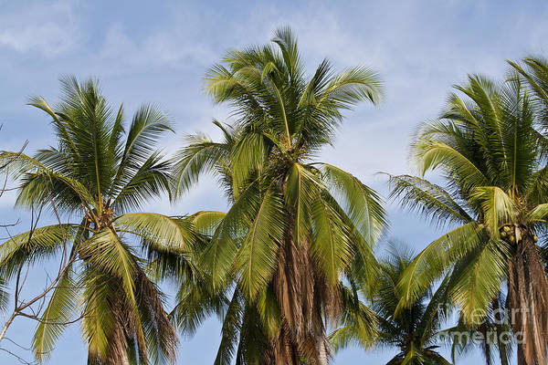 Photograph - Tropical Cliche by Heiko Koehrer-Wagner