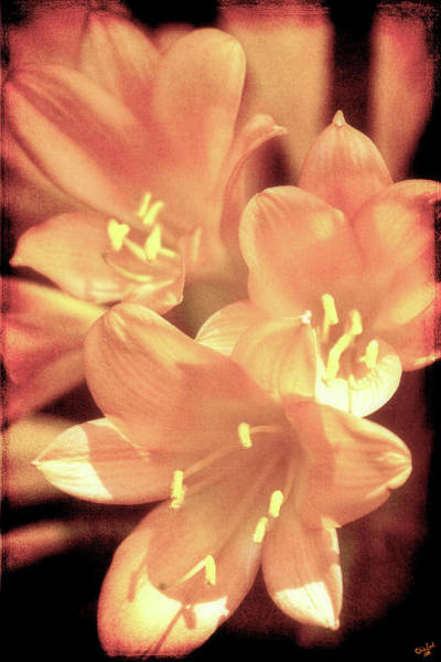 Photograph - Tropical Glow by Chris Lord