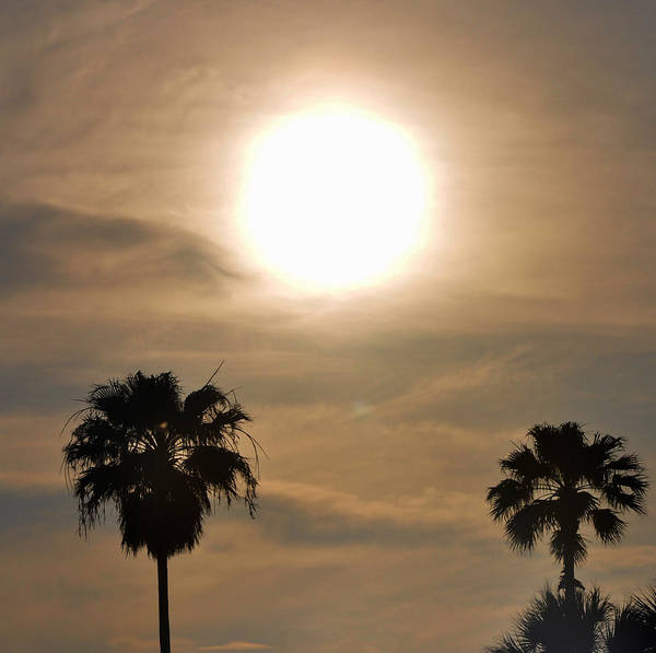 Photograph - Tropical Heatwave by Bill Cannon