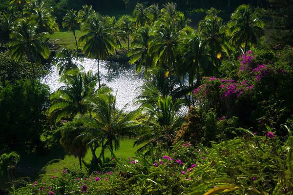 Allerton Garden Photograph - Tropical Hideaway by Roger Mullenhour