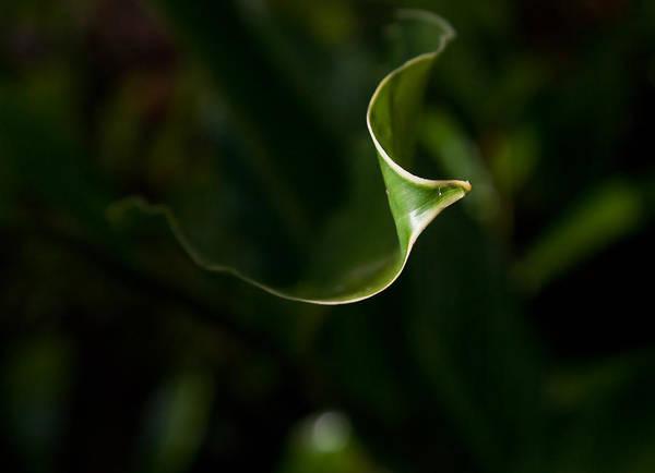 Wall Art - Photograph - Tropical Leaf by Patrick  Flynn