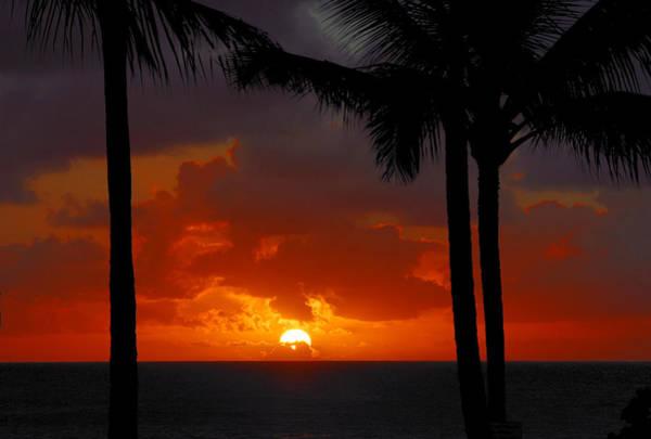Photograph - Tropical Sun by Lynn Bauer