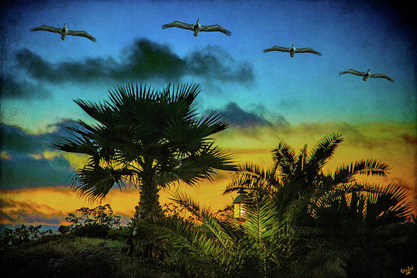 Photograph - Tropical Sunset With Pelicans by Chris Lord