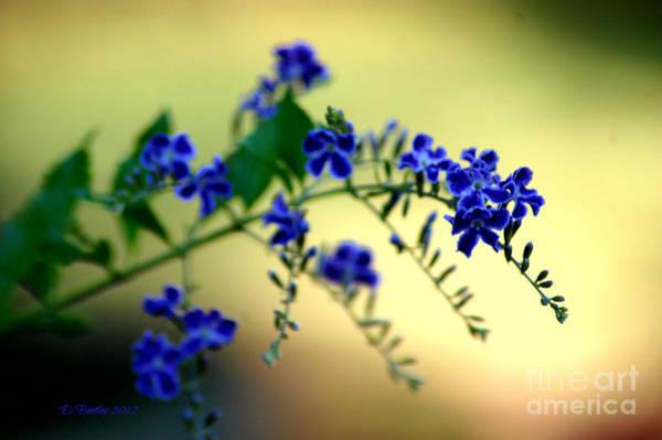 Photograph - Tru Blu by Donna Bentley
