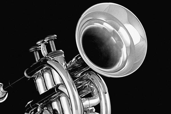 Photograph - Trumpet Up Front by M K Miller