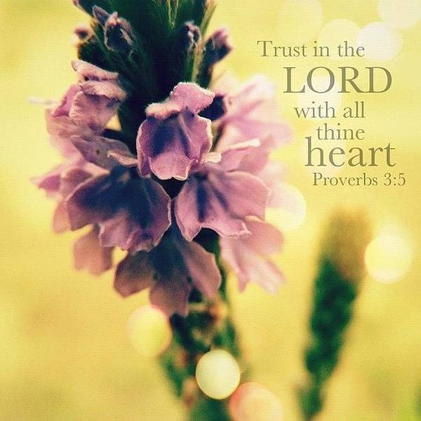 Wall Art - Photograph - trust In The Lord With All Thine by Traci Beeson
