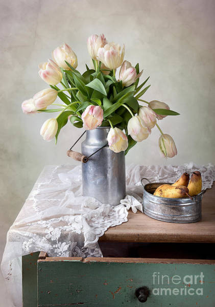 Tulip Flower Photograph - Tulips And Pears by Nailia Schwarz